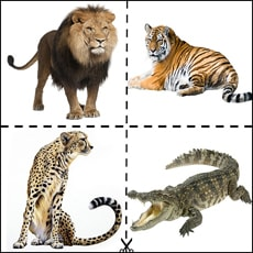 Животные на узбекском, русском и английских языках (видео)