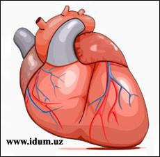 Как работает сердце? (видео)