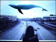 Как уберечь своих детей  от игры синий кит?