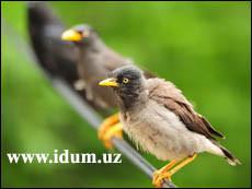 Почему птиц не бьет током на проводах? (видео)