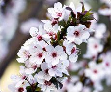 Поздравляем с праздником Навруз! (видео)